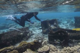 Snorkeler inspect concreted iron artefacts on site.