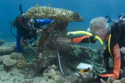 Divers investigate an anchor on the wreck site.