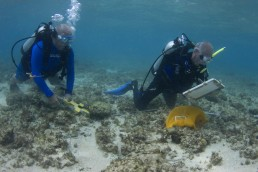 Divers undertake a survey of the site.