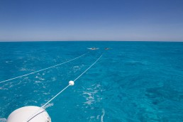 Snorkelers on manta boards being towed by boat undertake a rapid visual survey of the reef top.