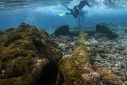 Snorkeling team inspects an anchor found on site. Image: Xanthe Rivett for Silentworld Foundation.