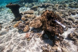 Two hawse pipes on a shipwreck site at Kenn Reefs. Image: Julia Sumerling for Silentworld Foundation, 2017.