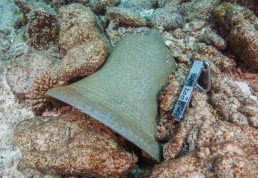 Bell found on one of the wreck sites at Kenn Reefs during the 2017 fieldwork. Image: Julia Sumerling for Silentworld Foundation, 2017.