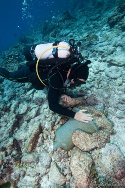 Maritime archaeologist, James Hunter, spotted a ship's bell on one of the wreck sites at Keen Reefs. Image: Julia Sumerling for Silentworld Foundation, 2017.