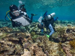 Maritime archaeologists Irini Malliaros and Peter Illidge record the features of a shipwreck site at Kenn Reefs. Image: Julia Sumerling for Silentworld Foundation, 2017.