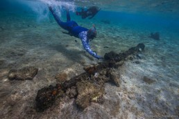 Maritime archaeologist Peter Illidge investigates a windlass component on the reef top. Image: Julia Sumerling for Silentworld Foundation, 2017.