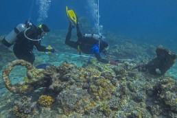 Diver undertake a baseline survey at Ashmore Reef
