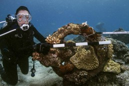 Diver holds scale against anchor ring.