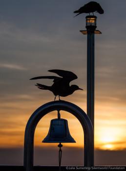 Sunset aboard Silentworld