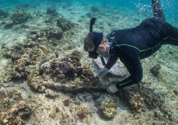 Maritime archaeolgist James Hunter investigates iron concretions found on Boot Reef.