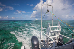 Running the magnetometer over the reef.